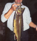 Bachsaibling 3,5 kg 2002