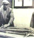 Glattdick 20kg 1936