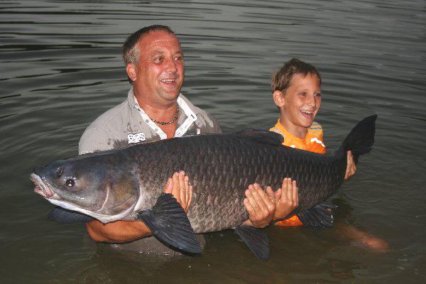 Schwarzer Amur 43,7 kg 2010