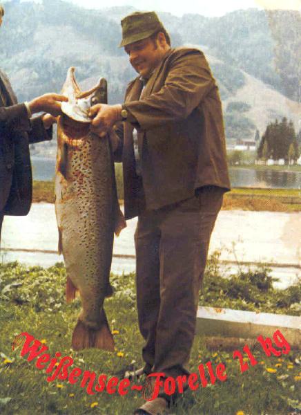 Seeforelle 20,85 kg 1974