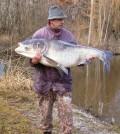 Silberamur 36,51 kg 2001