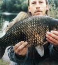 Giebel 3,53 kg 1999