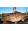 Karpfen 41,5 kg 2014 Diashow