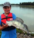 Wolgazander 1,66 kg 2012
