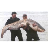 Wels 94 kg 2006 Diashow
