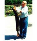 Hecht 25,5 kg 1992 Diashow
