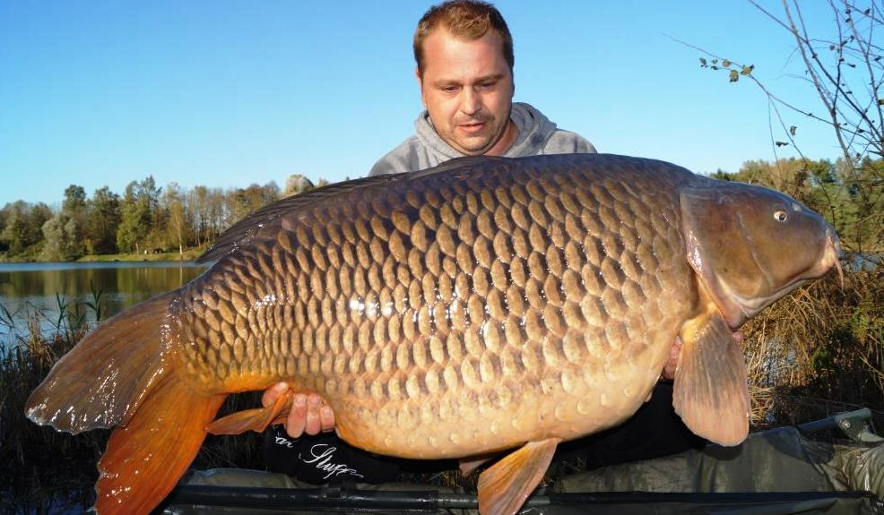 Karpfen 41,5 kg 2014