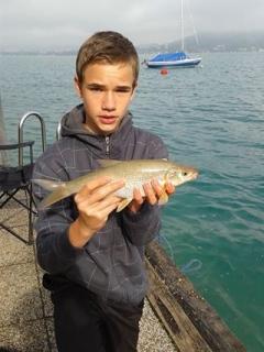 Mairenke ca. 0,3 kg 2014